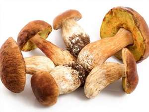 Picture of Porcini Mushrooms (Cèpes)