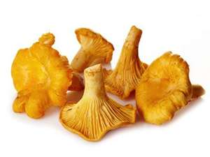 Picture of Chanterelle Mushrooms
