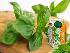 Picture of Basil (individually frozen)