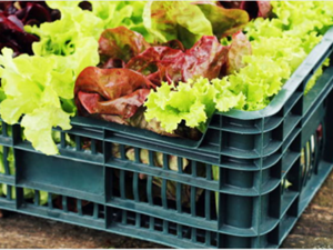 Picture of Organic Salad Box - Single